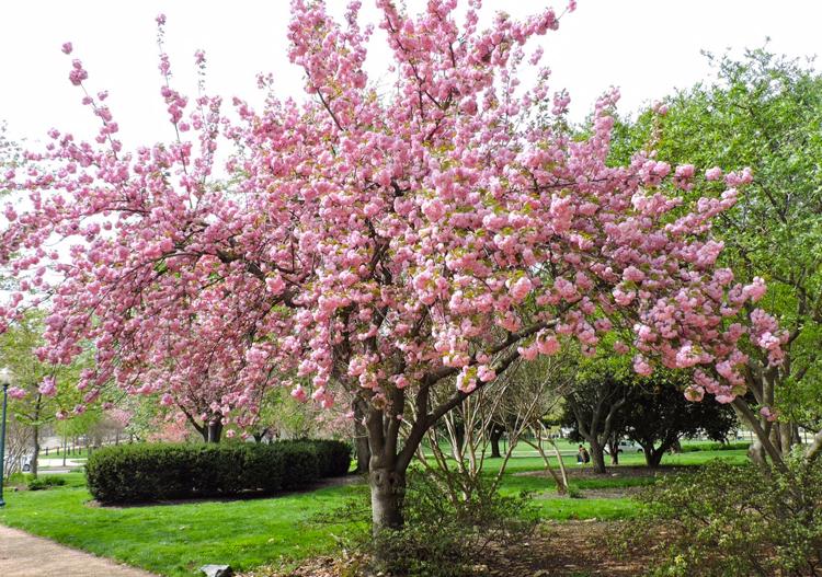 bate-e-volta-washington-cerejeiras