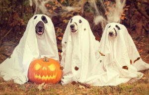 festa-de-halloween-1