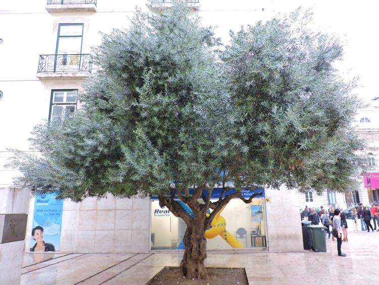 tour-taste-portugal-arvore-oliveira