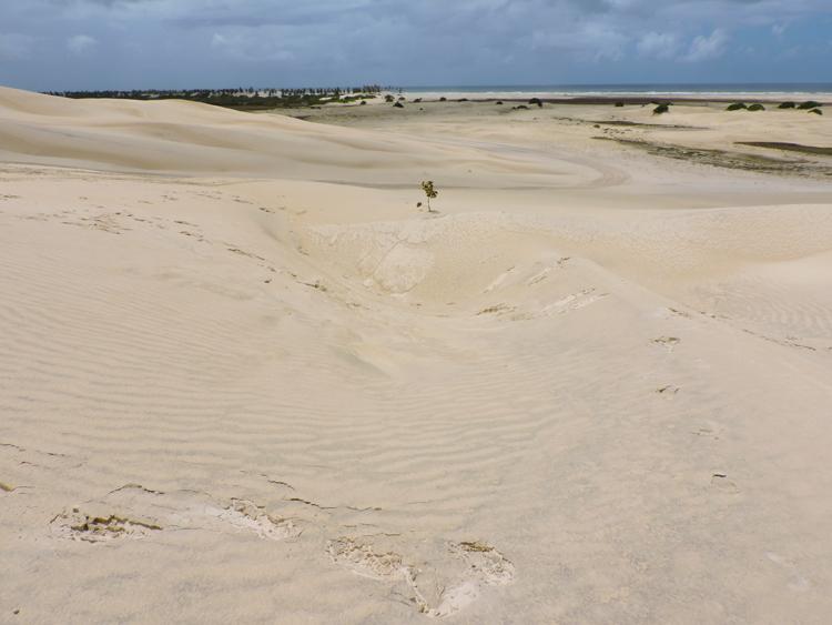 mangue-seco-bahia-dunas