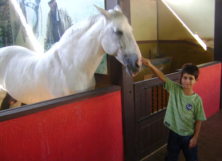 um-dia-beto-carrero-world-cavalo