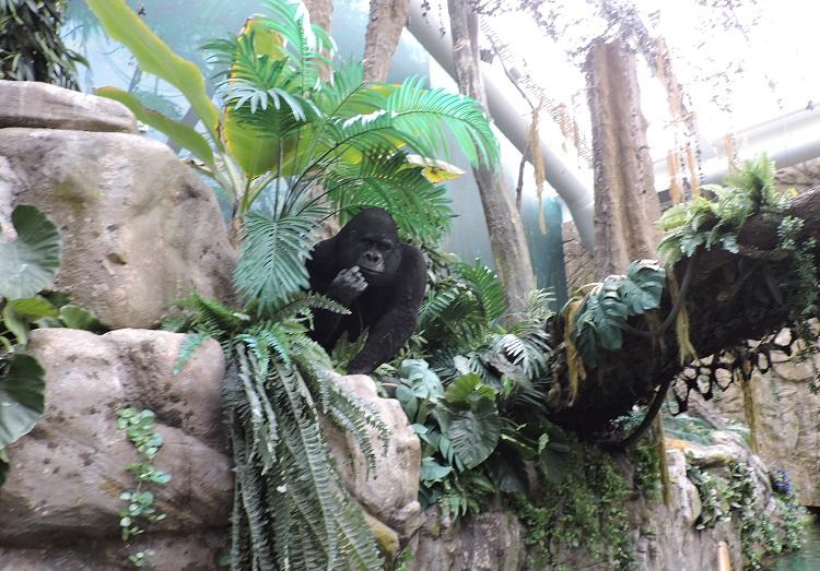 world-of-discoveries-porto-gorila
