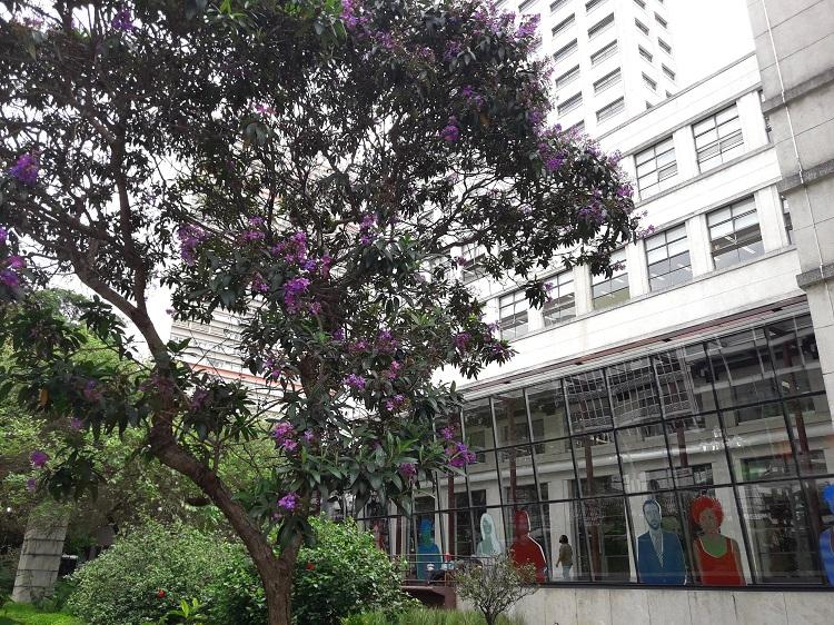 passeios-gratuitos-sao-paulo-pateo-do-collegio
