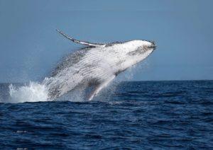 passeio-observacao-baleias-jubarte-vitoria-es