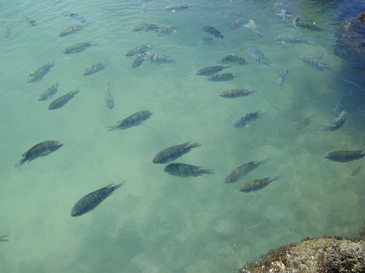 porto-de-galinhas-piscinas-naturais-peixinhos