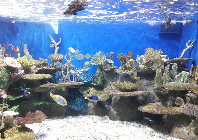o-que-fazer-no-rio-de-janeiro-aquario-peixes