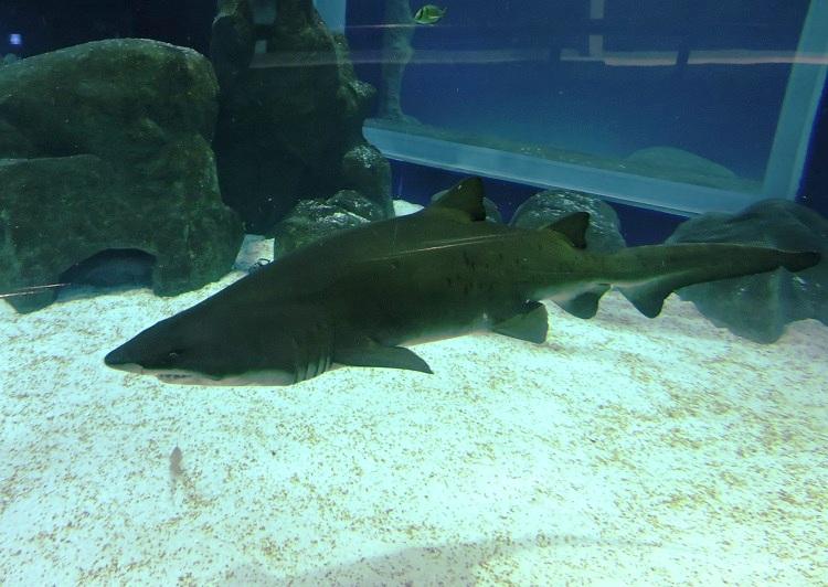 o-que-fazer-no-rio-de-janeiro-aquario-tubarao