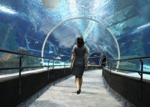 como-visitar-aquario-rio-de-janeiro