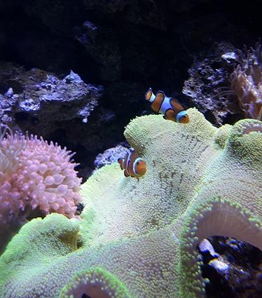 como-visitar-aquario-rio-de-janeiro-nemo1