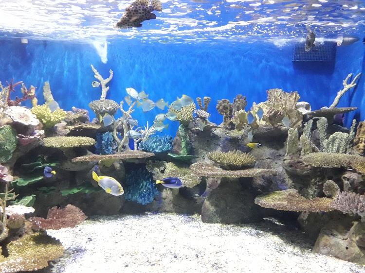 como-visitar-aquario-rio-de-janeiro-peixes-dory