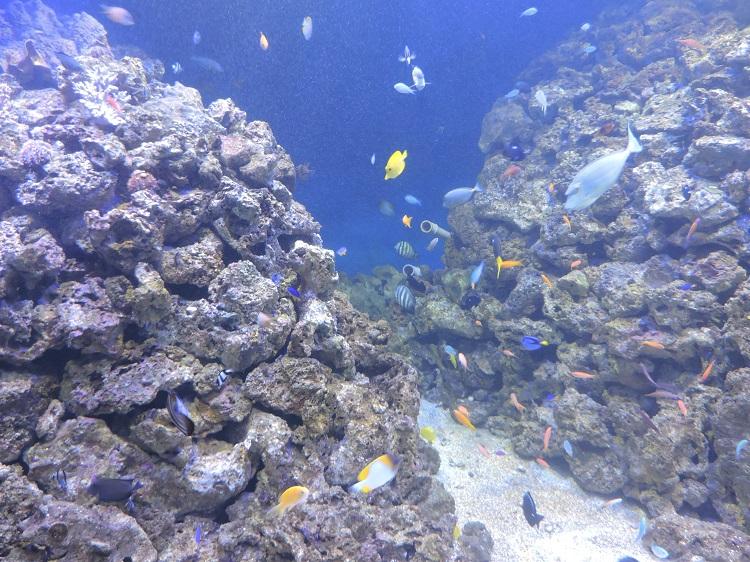 como-visitar-aquario-rio-de-janeiro-peixes2